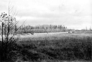 Sumpfgebiet an der Beresina