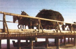 Nachschub per Pferdetransport