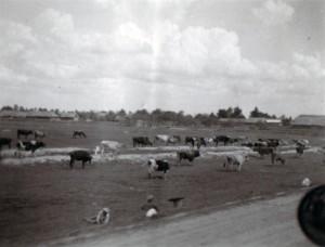19410717 Stare-Dorowy