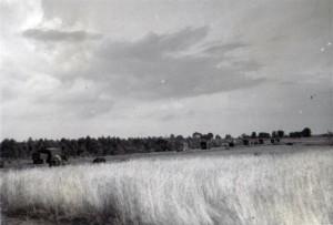 19410819 bei Shitanjesb